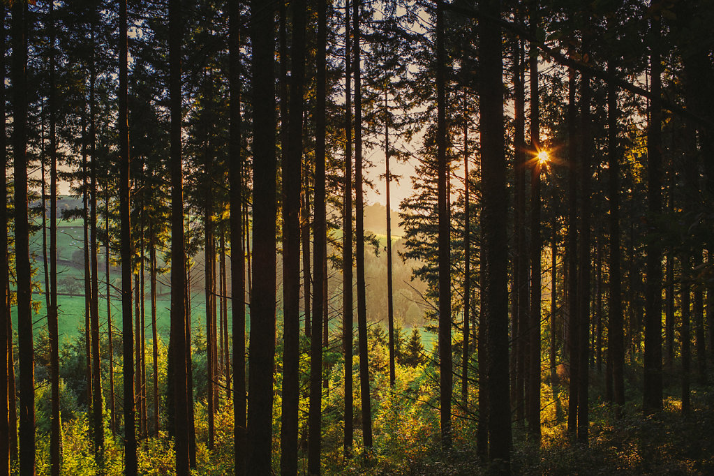 Sunset in the wood